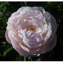 Лавендер Букет (Lavender Bouquet) № 131