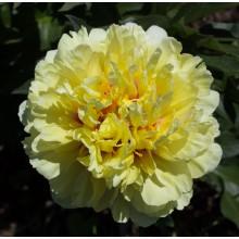 Гарден Треже (Garden Treasure) № 52